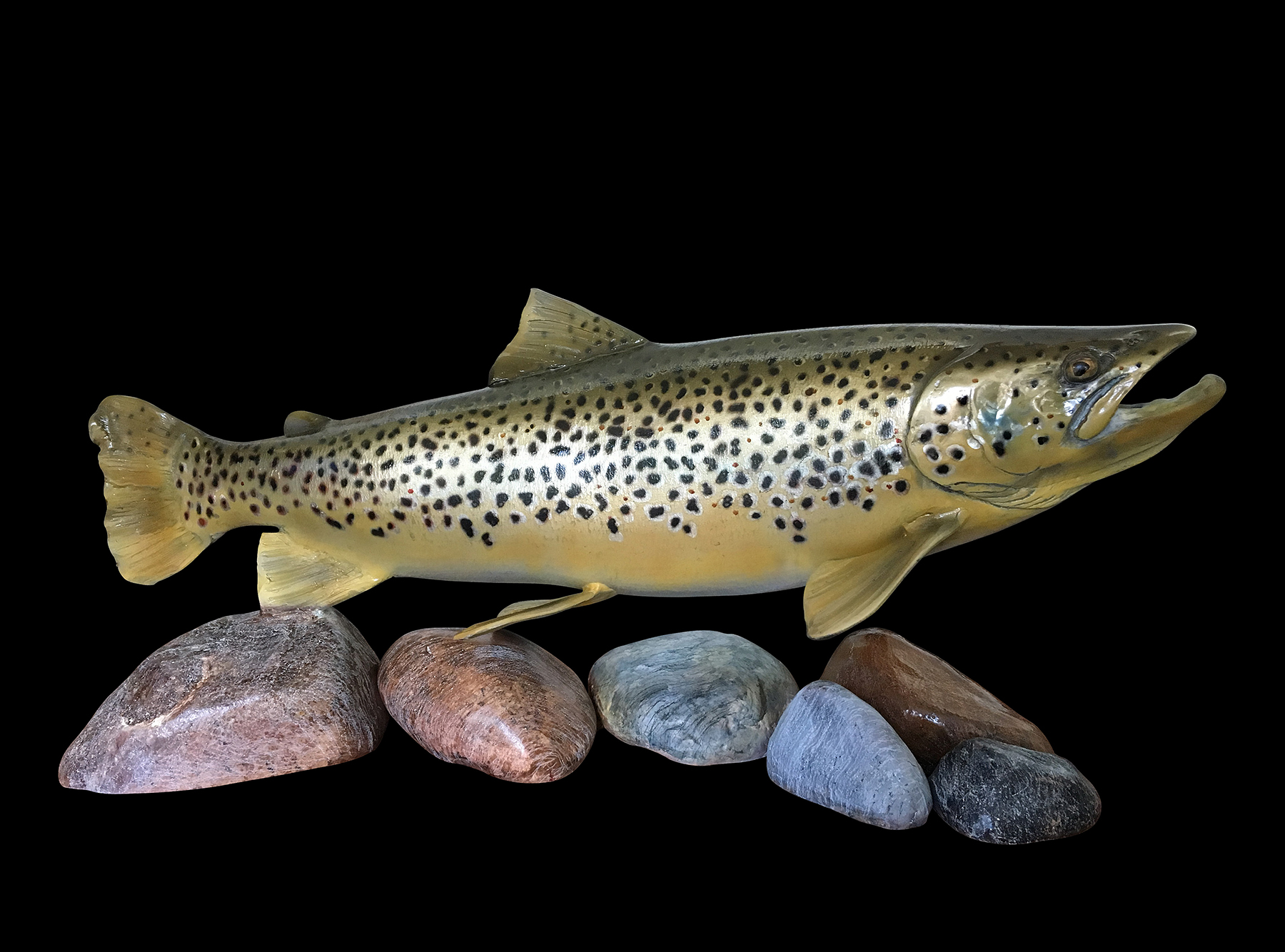 Brown Trout .22